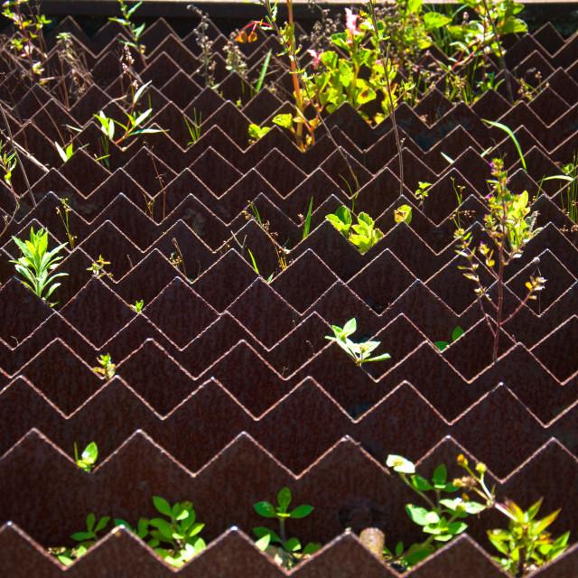 """Zigzag with plants"" stock image"