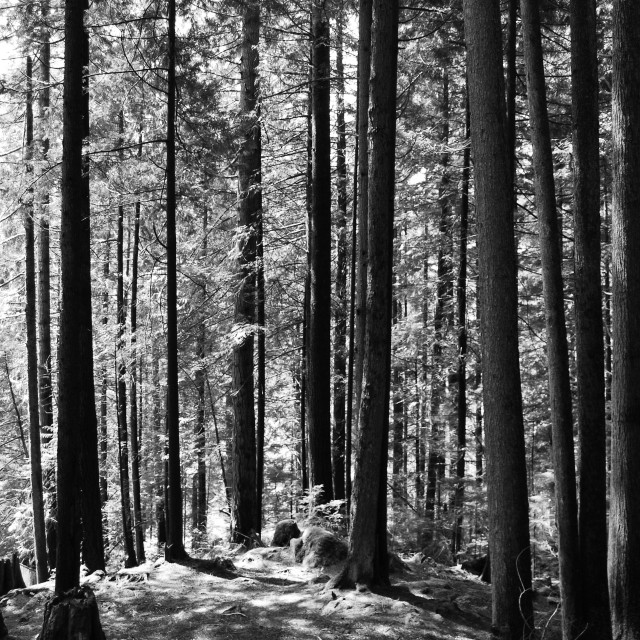 """""""Vancouver forest"""" stock image"""