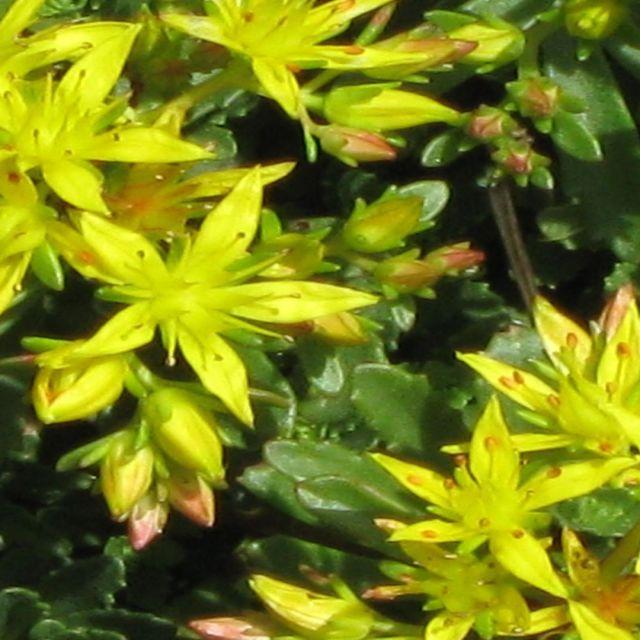 """Green/ Yellow flower"" stock image"