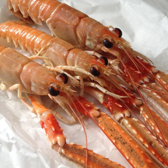 """Crayfish"" stock image"