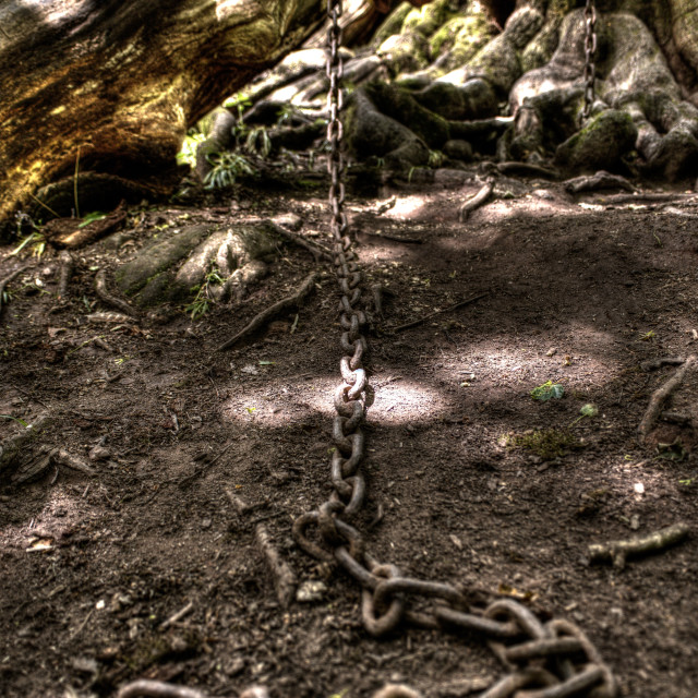 """""""Chained Oak"""" stock image"""