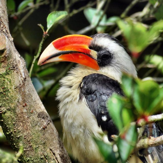 """""""Tropical bird"""" stock image"""
