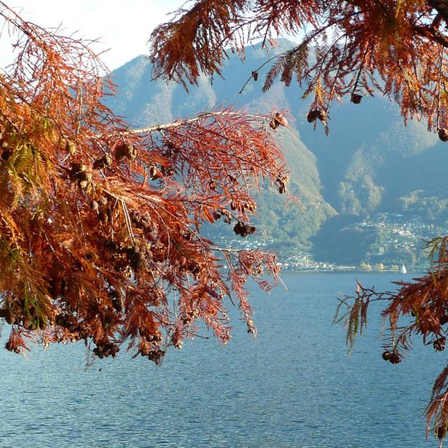 """Autumn on the lake, Locarno, Switzerland"" stock image"