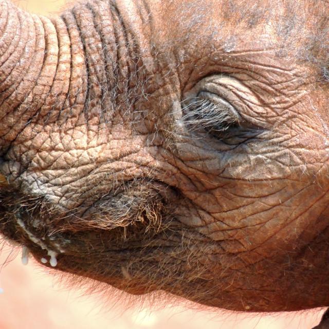 """Orphan baby elephant"" stock image"