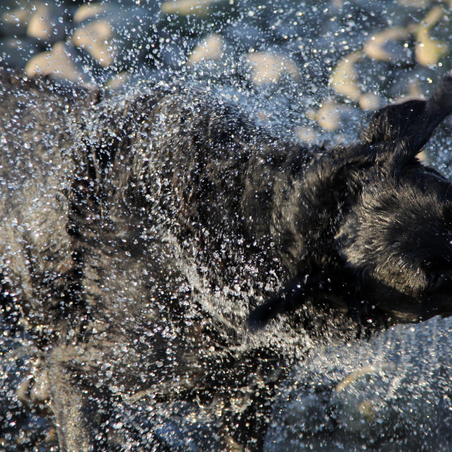 """Dog Spray"" stock image"