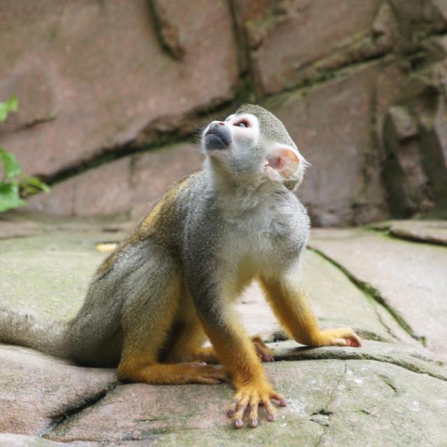 """""""monkey trouble"""" stock image"""