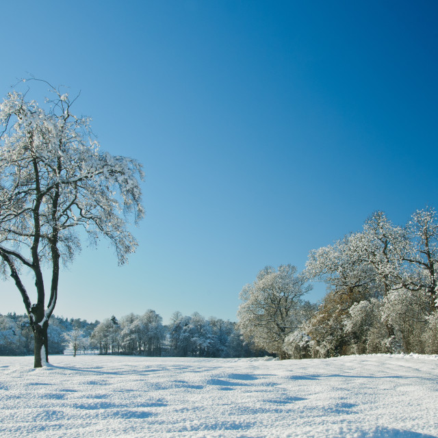 """""""A Winter's View"""" stock image"""