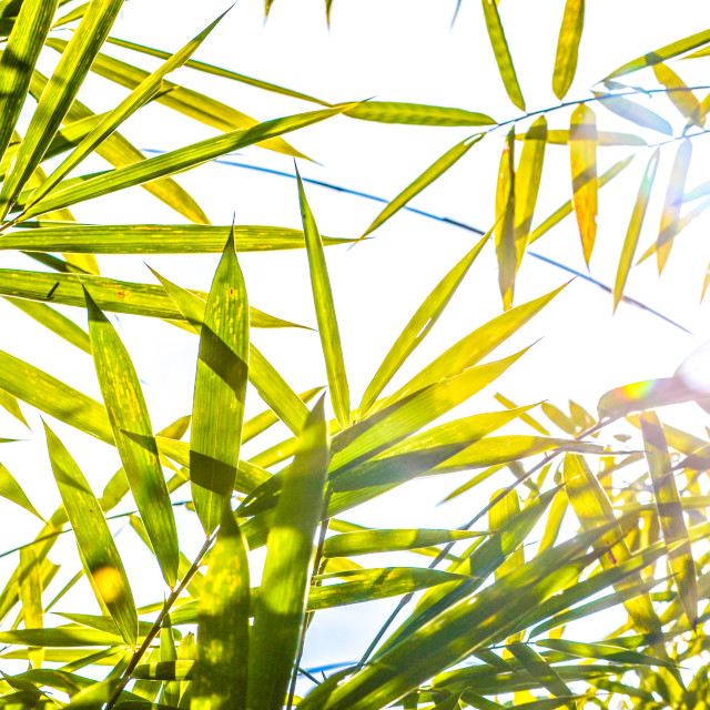 """Bamboo bliss"" stock image"