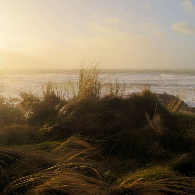 """""""'Fistral Grass'"""" stock image"""