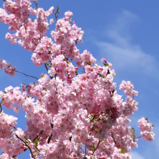 """Spring bloom"" stock image"