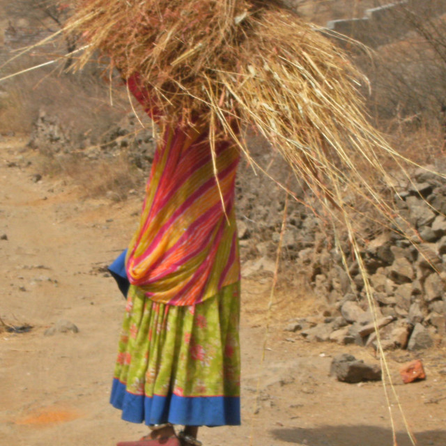 """Indian woman carrying straw"" stock image"
