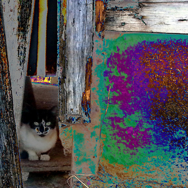 """Portuguese Street Cat"" stock image"