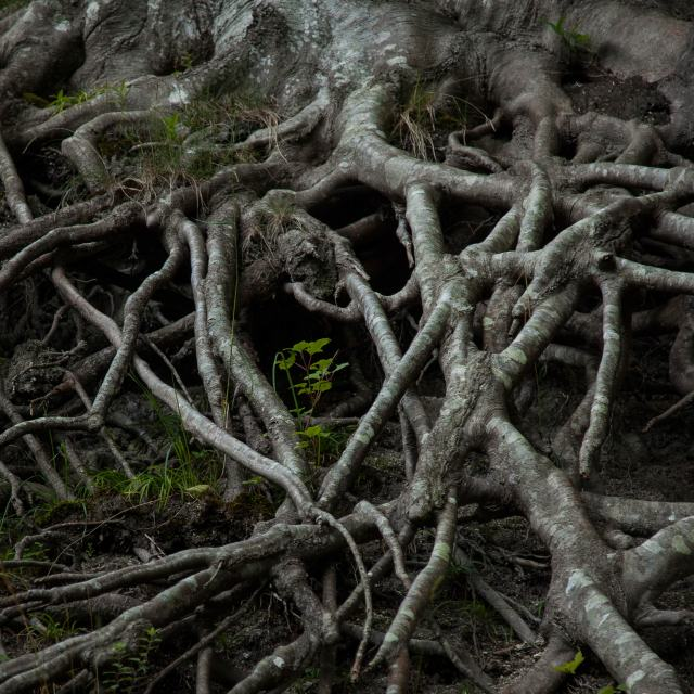 """""""Roots"""" stock image"""