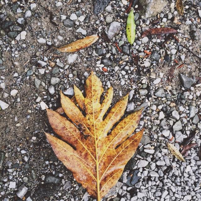 """Fallen leaf 🍂"" stock image"