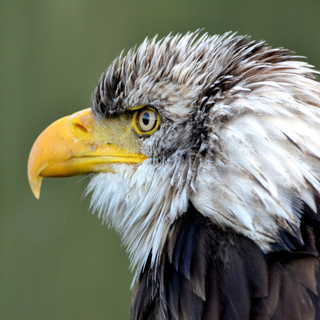"""Eagle Eyed"" stock image"