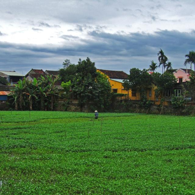 """Vietnamese Farmer, Hoi An"" stock image"