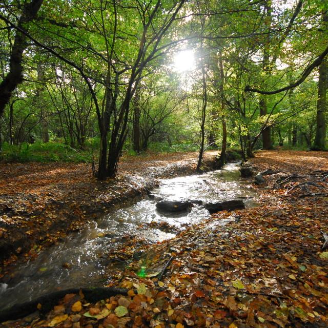 """Autumn Stream"" stock image"