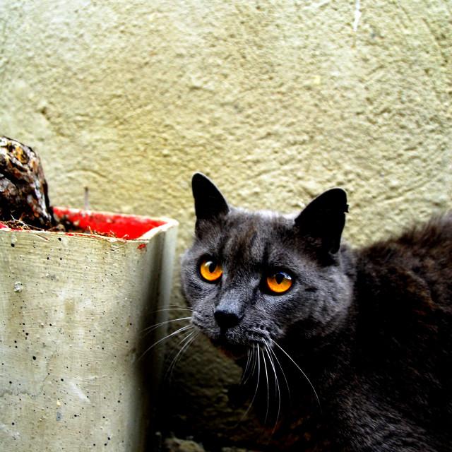 """Grey Feline"" stock image"