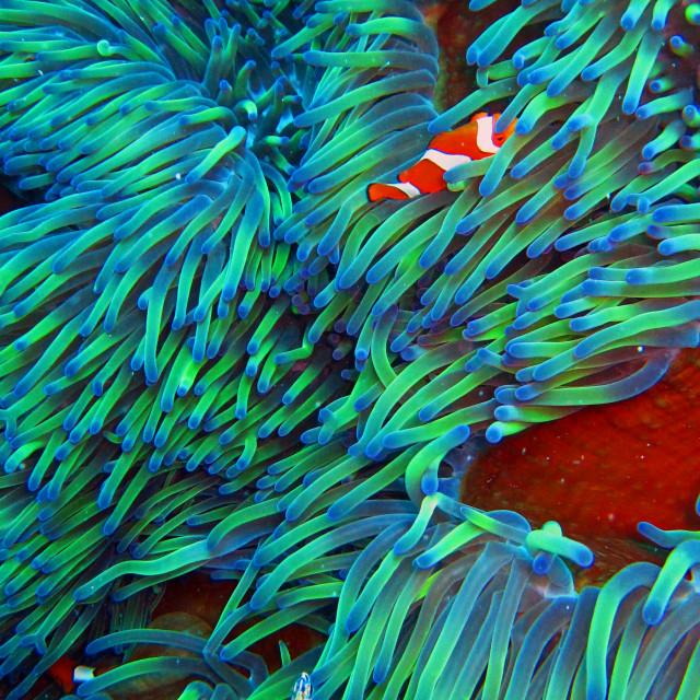 """Nemo"" stock image"