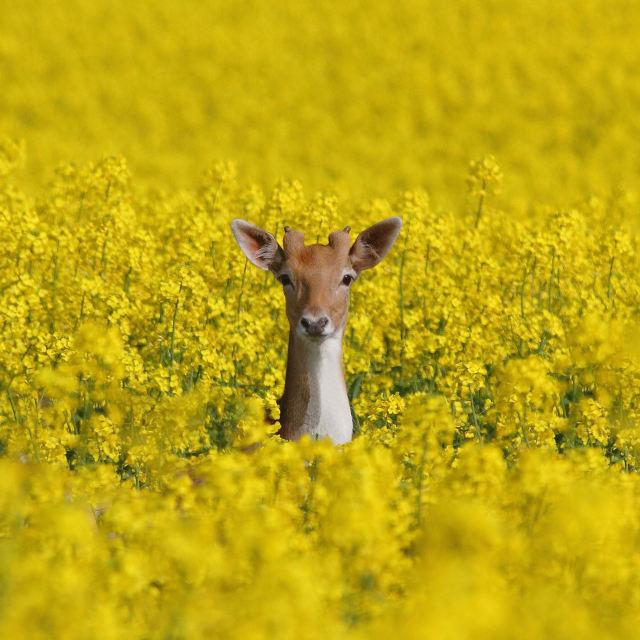 """""""Peek a Boo"""" stock image"""