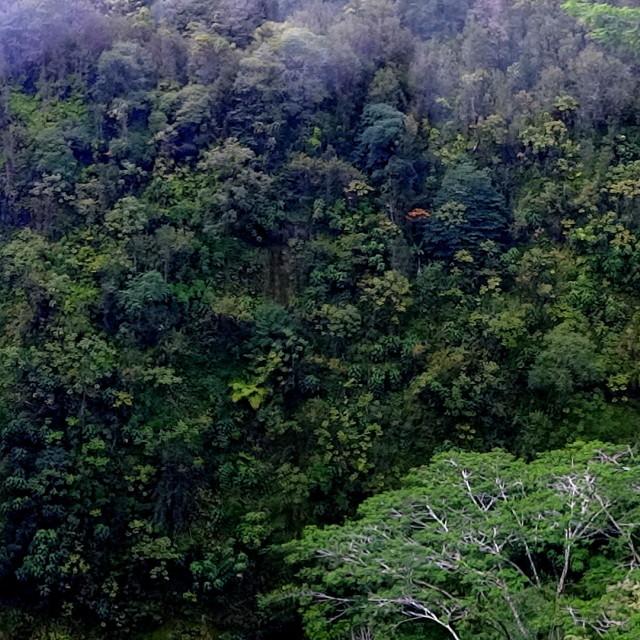 """""""Akaka Falls"""" stock image"""