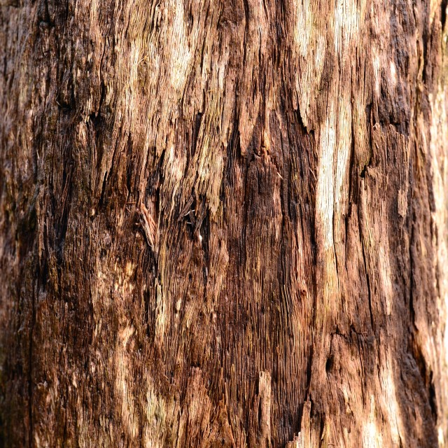 """Tree bark background texture"" stock image"