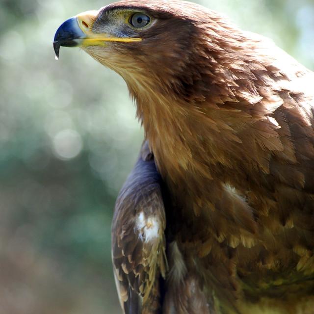 """""""Eagle, Portugal"""" stock image"""