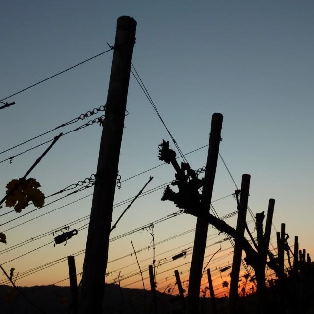 """Vinyard Sunset"" stock image"