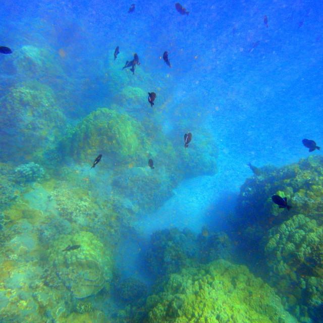 """""""Underwater shot in Hawaii"""" stock image"""