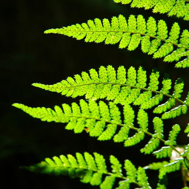 """Glowing Ferns"" stock image"