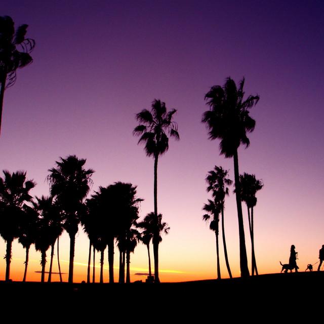 """Dog Walk California"" stock image"