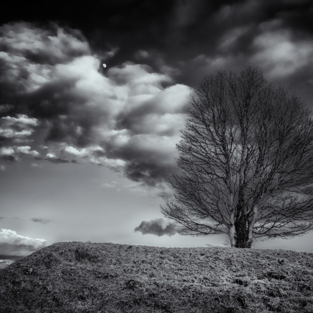 """A Lone Tree & The Moon"" stock image"