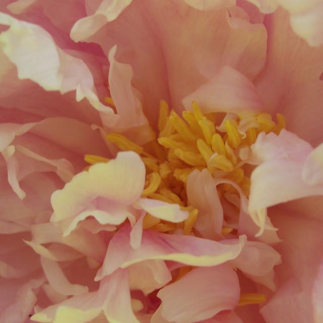 """Pastel Summer"" stock image"