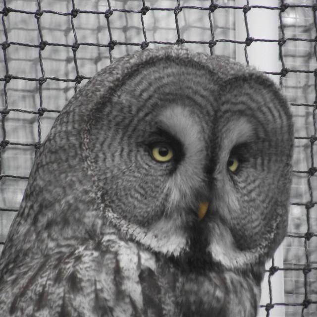 """Owl"" stock image"