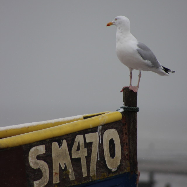 """Seaside Seagull"" stock image"