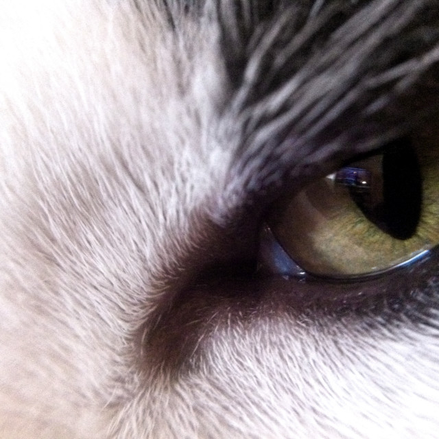 """Cat's eye"" stock image"