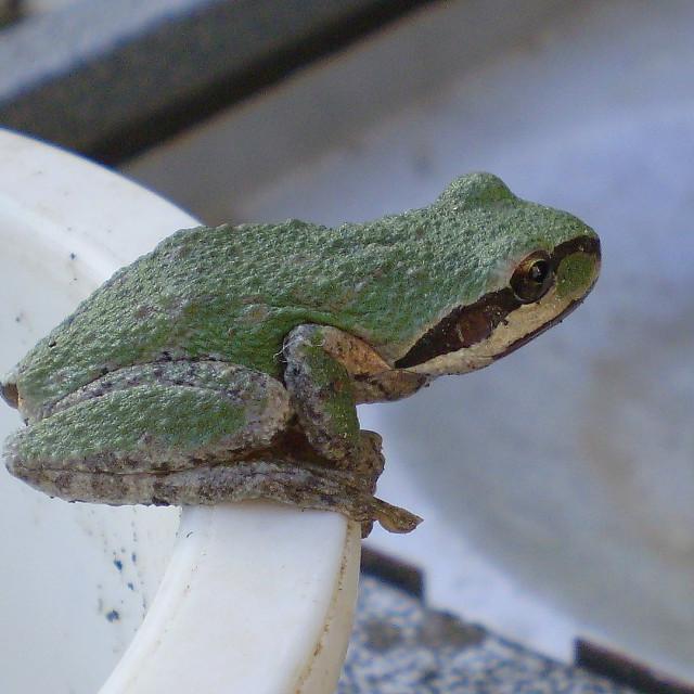 """Froggy."" stock image"
