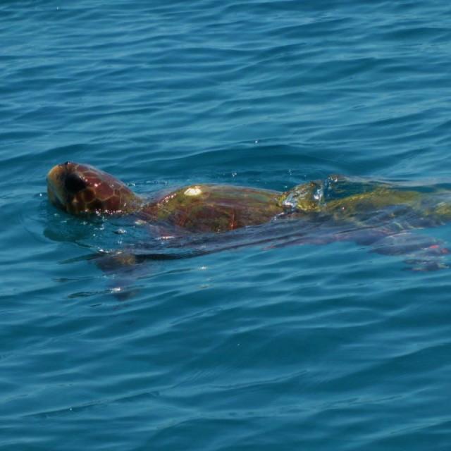 """""""Zante Turtle"""" stock image"""