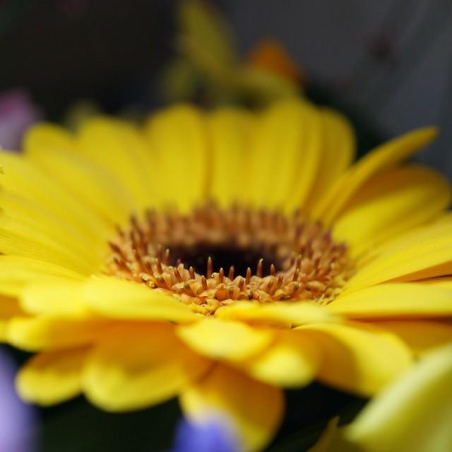 """""""Sunflower Macro"""" stock image"""