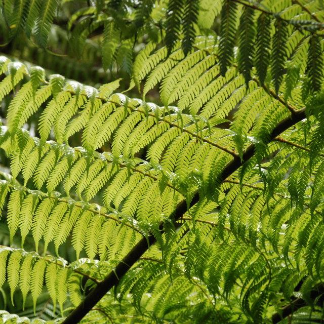 """Fern Leaves"" stock image"