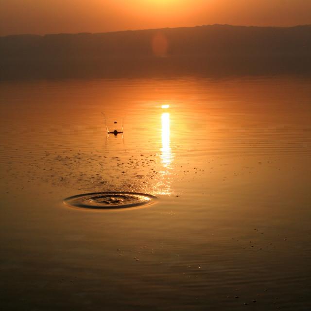 """""""Dead Sea Skimming"""" stock image"""
