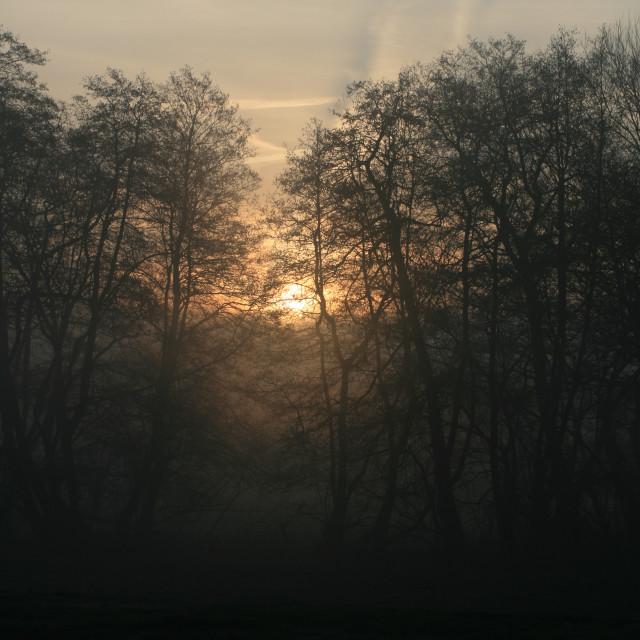 """Misty morning 02"" stock image"