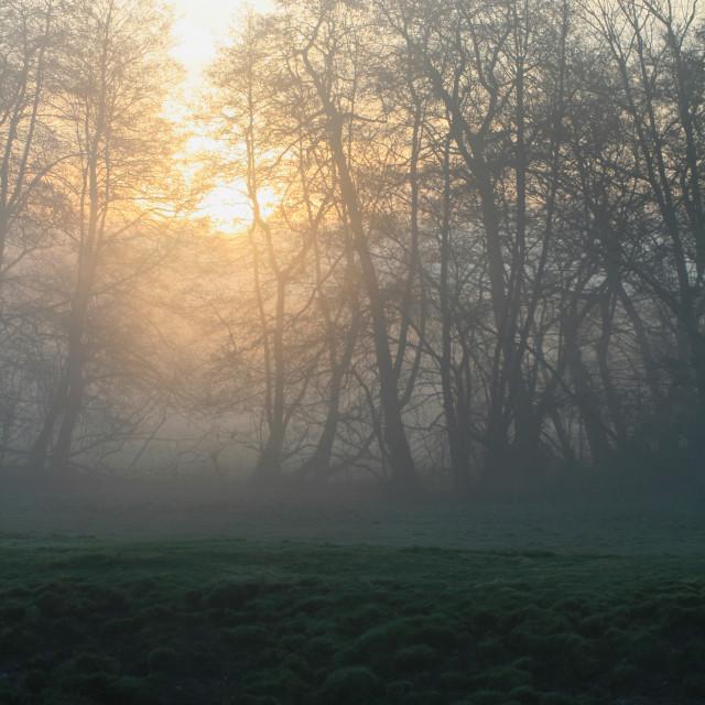 """Misty morning 06"" stock image"
