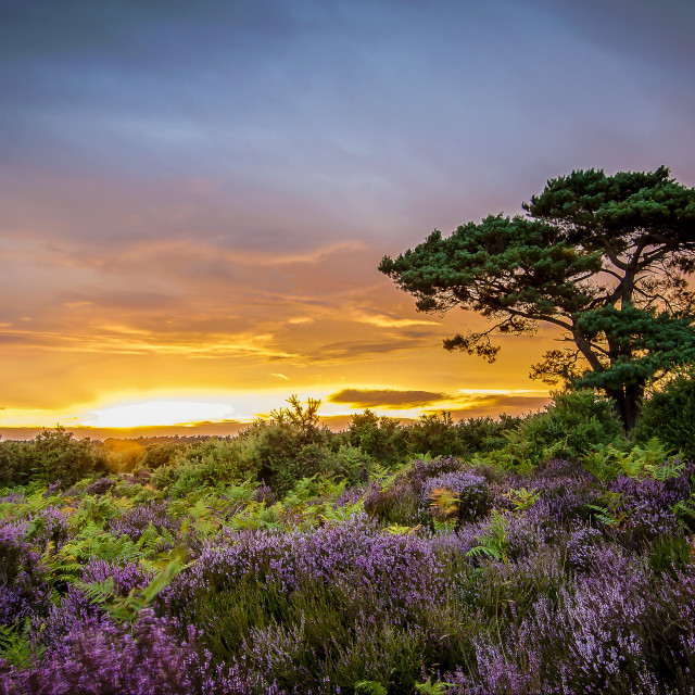 """New Forest Sunset"" stock image"