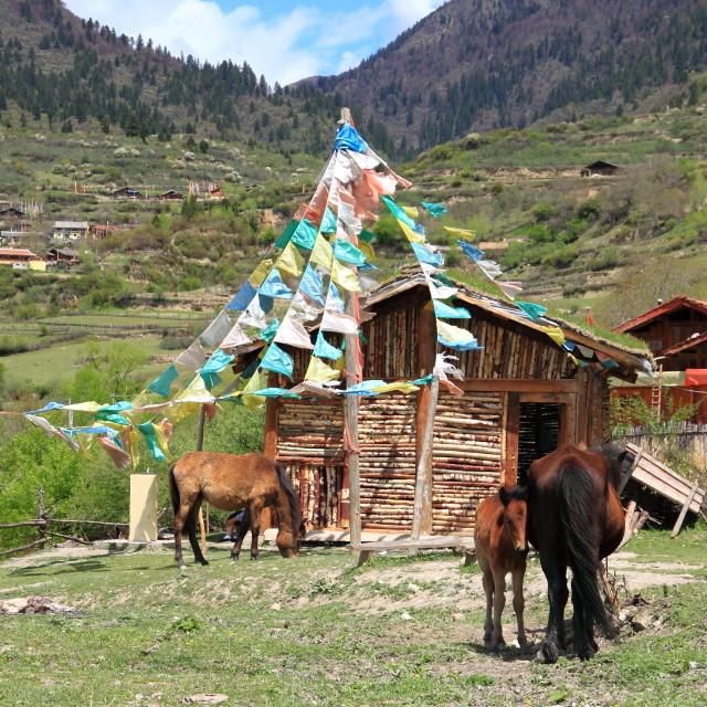 """Jiuzhaigou Tibetan village"" stock image"