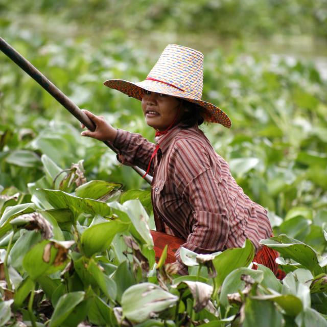 """""""Mekong living"""" stock image"""