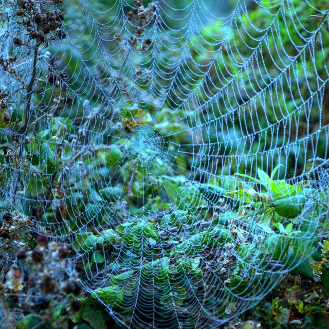 """Web in brambles"" stock image"