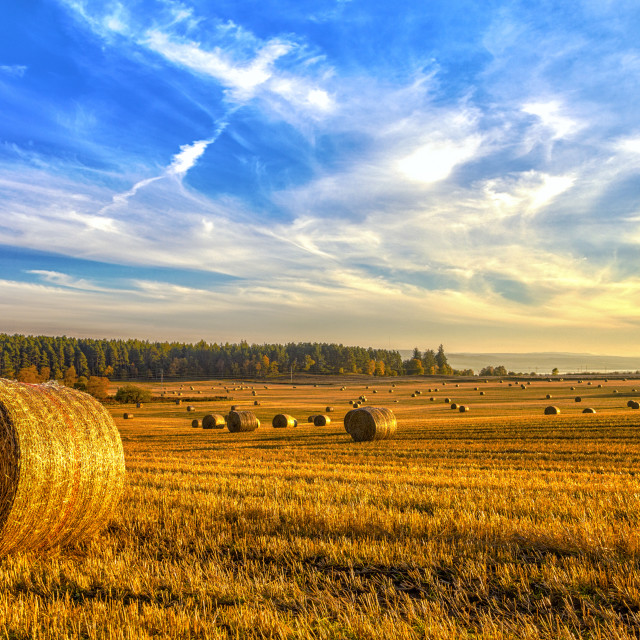 """Hay Bales in the Sun"" stock image"