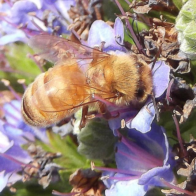 """Buzzy Bee."" stock image"