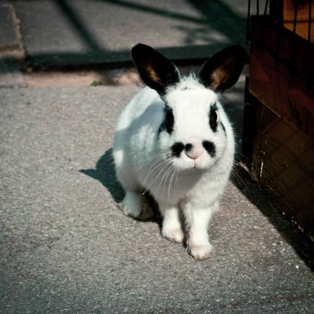 """""""The rabbit that came to visit"""" stock image"""